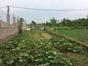 Bán đất sổ đỏ tại Đô thị vệ tinh Sóc Sơn xã Đông Xuân Sóc Sơn Hà Nội