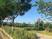 Cần tiền bán gấp lô đất TT TP Đà Nẵng thuộc quận Hải Châu,mua để an cư đẳng cấp