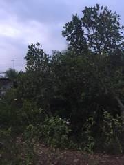 1,5công đất mặt tiền huyện lộ ấp 2, Tam Hiệp, Châu Thành, Tiền Giang.