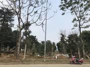 Chính chủ cần bán gấp đất làm nhà xưởng , nhà vườn tại mặt đường km5 Đại lộ Thăng Long