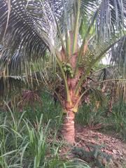 1công vườn hẻm 2m, xã Phước Thạnh,TP.Mỹ Tho.