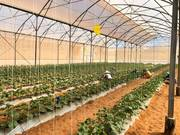 Đất gần khu nông nghệp công nghệ cao