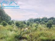 Bán đất nông nghiệp mt 464 cầu trắng , xã trung an, dt 3400m2 giá 4tỷ 600tr. lh