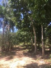 Bán trang trại có sẵn nhà vườn 93.000m2 xã khánh phú, khánh vĩnh, giá rẻ