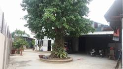 Cho thuê xưởng rộng với diện tích 2000m2 Tại cụm làng nghề triều khúc