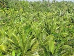 Đất vườn 17.000 mét vuông giá 2.1 tỷ , vườn cây trang trai và ao nuôi tôm .