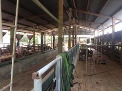 Bán gấp Trang Trại 1.7 Ha Phú Cường - Đồng Nai