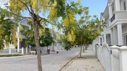 Bán nhà mặt tiền đường Lê Thánh Tôn nối dài Tp Quảng Ngãi