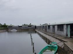 Cần chuyển nhượng Trang Trại Lợn tại Kiến Thụy, TP.Hải phòng