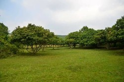 Bán Đất vườn cạnh Flamingo Resort Đại Lải