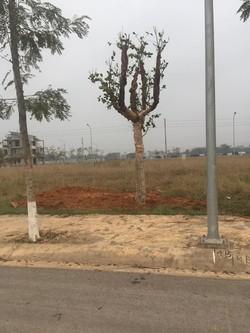 Chỉ cần 250TR sơ hữu ngay  lô đất đẹp tại KĐT bậc nhất thành phố Vĩnh Yên