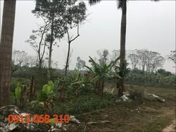 Chuyển nhuợng hoặc cho thuê 12.000 m2 đất 50 năm tại Thanh Cao, Thanh Oai, Hà Nội