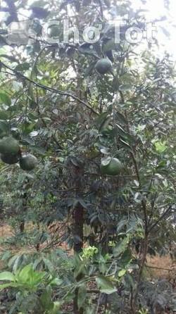 Đất trồng cây ăn trái