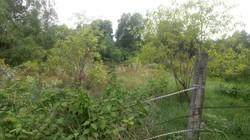 Cho thuê lô đất trống 1200m2 đường Huỳnh Bá Chánh. LH 0916302979 Phúc