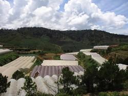 Bán 30.000m2 đất nhà kính khu nông nghiệp công nghệ cao Đà Lạt