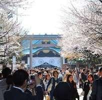 8 Tour du lịch Nhật Bản ngắm hoa Anh Đào