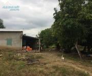 1 Chính chủ bán hoặc cho thuê đất nông nghiệp làm trang trại tại Sông Ray, Cẩm Mỹ, Đồng Nai
