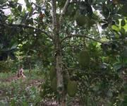 4 Chính chủ bán hoặc cho thuê đất nông nghiệp làm trang trại tại Sông Ray, Cẩm Mỹ, Đồng Nai