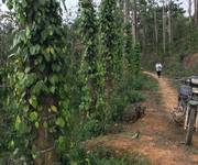 9 Đất nông nghiệp 50 ha ở Đạ Rsal, Đam Rông, Lâm Đồng