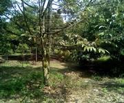 3 Bán trang trại trái cây Trảng Bom Đồng Nai
