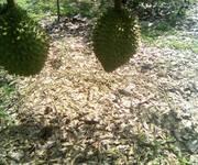 Bán trang trại trái cây Trảng Bom Đồng Nai
