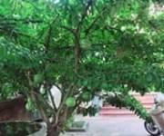 8 Bán nhà cổ 5 gian xã Lại Thượng, Thạch Thất, Hà Nội