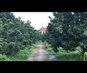 6 Tìm đối tác KD hoặc chuyển nhượng trang trại tại Lương Sơn, Hòa Bình