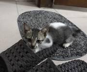 1 Cần 1 nữ ở ghép cho nuôi mèo tại SƯ VẠN HẠNH, Q.10