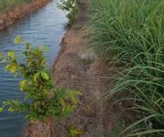 1 Bán 14006m  Đất Trồng Lúa giá cực rẻ Tại Tân Phú Đông,Tiền Giang .