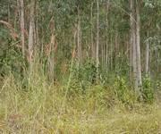 2 Đất lâm nghiệp trồng bạch đàn Hàm Thuận Nam, Bình Bình Thuận