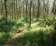 Chính chủ Cần bán 5 mẫu đất trồng cây lâu năm Huyện Đắk R Lấp, Đắk Nông