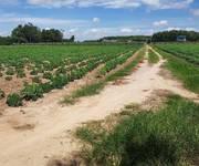 4 Đất thổ cư Vĩnh Thanh, Nhơn Trạch, SHR, oto vào tận đất, giá 2.5tr/m2