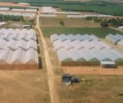 2 Bán đất nông nghiệp bắc bình - bình thuận 280tr 4000m2