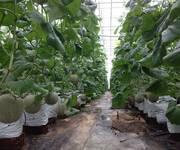 1 Nhiều lô đất vườn Bình Thuận giá chỉ 50ngàn/m2 , đất thật giá thật nhanh tay đầu tư