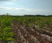 Cần bán lô đất rẫy - Xã Tân Bình, Thị Xã Lagi.