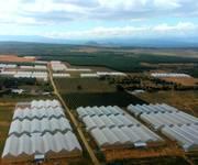 1 Đất sổ đỏ, mua đầu tư lợi nhuận cao sát trang trại. 650 triệu/10000m2