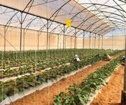 2 Đất nông nghiệp Bắc Bình-Bình Thuận,shr