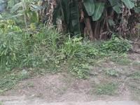 Bán đất Cái Tắt, An Đồng, An Dương, 100m2
