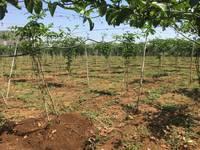 Bán lô đất đẹp tặng nhà  ở R chai, xã Phú Hội, Đức Trọng, Lâm Đồng