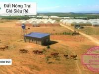 Chính chủ cần bán lô đất nông nghiệp ở Bình Thuận, SHR, chỉ 50.000/m2