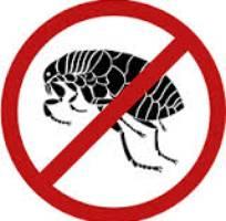 1 Diệt muỗi, Diệt côn trùng, thuốc diệt côn trùng 365 tại hà Nội