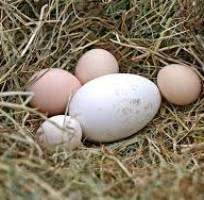 8 Đại lý, cửa hàng  bán trứng ngỗng sạch tại hà nội