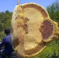 Cần bán mật ong