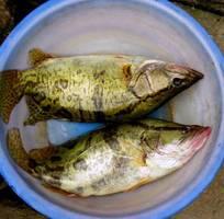 9 Cung cấp hải sản độc lạ  các loại cá thủy sản tươi sống quý hiếm