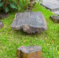 Bộ bàn gỗ mun hóa thạch cực hiếm