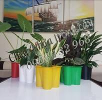 15 Chậu Nhựa Hoa Tết, Chậu Nhựa Hoa Tết