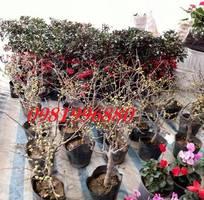 7 Hoa mai đỏ - Trao tết yêu thương