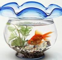 1 Cách khắc phục nước bể cá bị đục