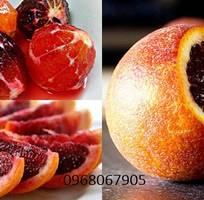 1 Giống cây Cam máu chuẩn giống nhập khẩu, uy tín chất lượng. Cam kết giống chuẩn đến khi cho quả