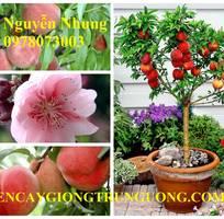 7 ĐÀO CHỊU NHIỆT NHẬT BẢN được Viện cây giống Trung Ương chuyên cung cấp cam kết chuẩn chất lượng